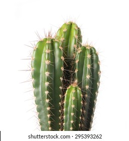 cactus isolated on white background  - Shutterstock ID 295393262