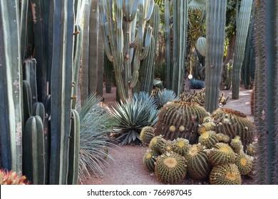 Cactus at Jardin Majorelle Marrakech, Marocco
