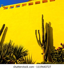 Cactus mood. Cactus on a background yellow wall