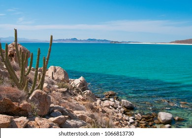 Cactus and mountains of Isla Espiritu Santo, La Paz Baja California Sur, Sea of Cortes. MEXICO