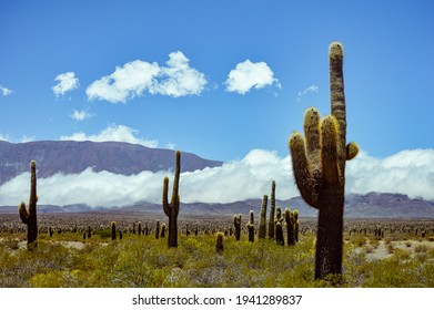 cactus and mountains in Salta, Argentina