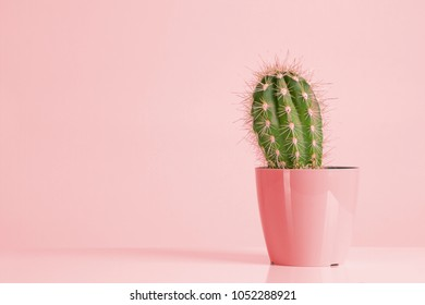 Cactus Neon. Minimal Style life. Art Gallery Fashion Design. Vanilla Pastels Trendy Color. Concept on color background. Detail