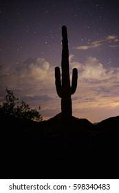 cactus night sky