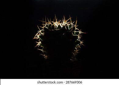 Cactus on black background with bright thorns.