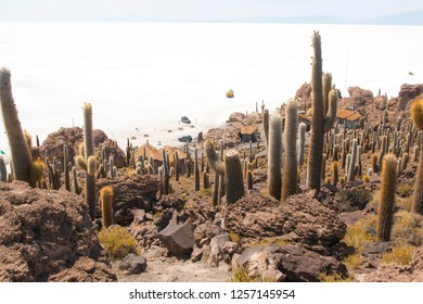 Cactus on Incahuasi island, Salar de Uyuni, Bolivia. On a summer day