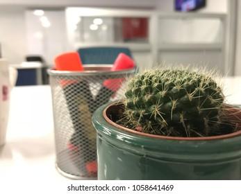 Cactus on office desk, pen holder in background