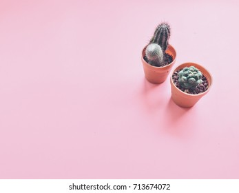 Cactus on pink background with copy space.