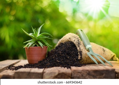 cactus on plant pot with fertilizer bag  over green background, Summer garden concept