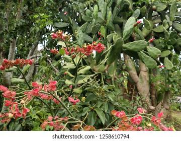 Cactus on Samosir island