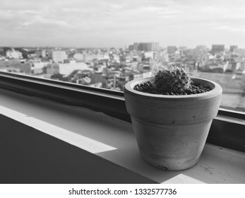 Cactus on window of office building