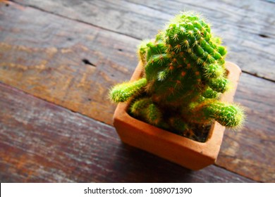 cactus on wood table