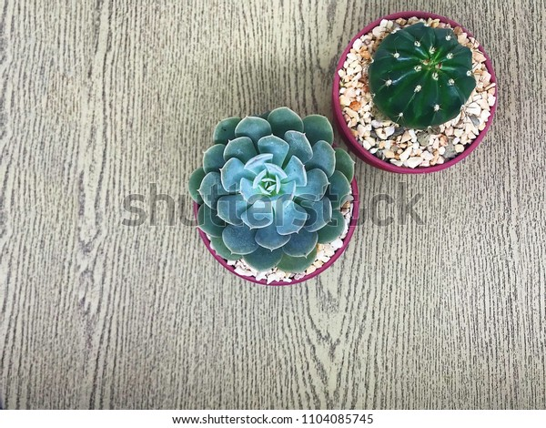 Cactus  on wood texture background.