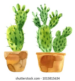 Cactus Opuntia painted watercolor on a white background. Suculents and potted plants.