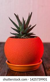Cactus in an orange flowerpot. Round orange pot. Decoration.