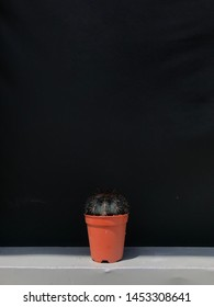 Cactus outdoor VSCO small orange