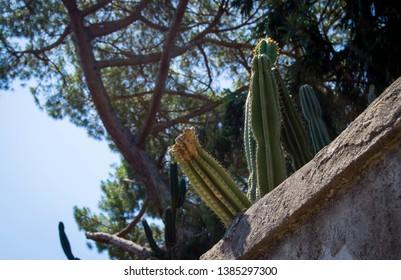 Cactus over fence under summer sun