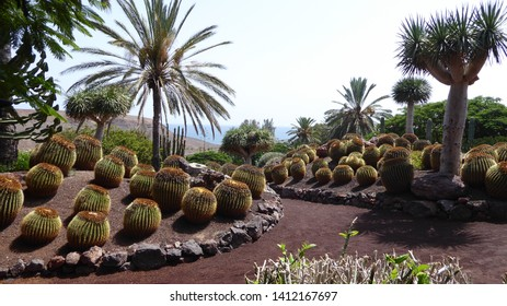 Cactus and palm trees in Oasis park in Fuerteventura, Canary islands