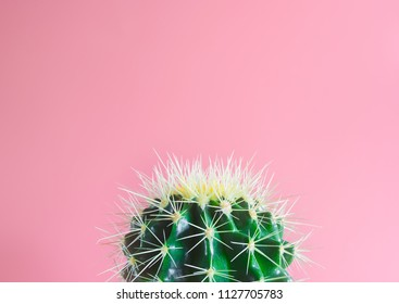 Cactus and pink background