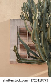 Cactus plant beautiful shadows on the wall. Creative, minimal, bright and airy styled concept.