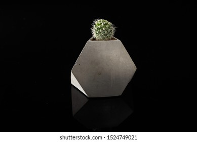 Cactus plant in a geometric concrete gray pot on a black background
