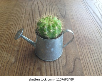 Cactus plant in a midget watering pot.