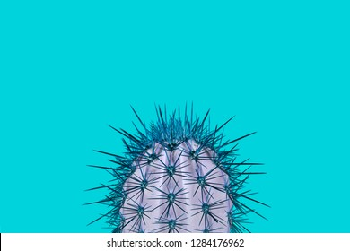 Cactus plant on a turquoise background in a trendy abstract style