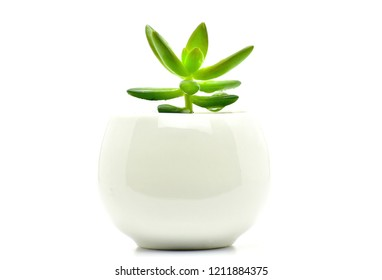 cactus plant pot isolate for decoration and interia design