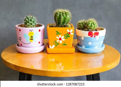 cactus plant in pots decoration on the table with concrete wall
