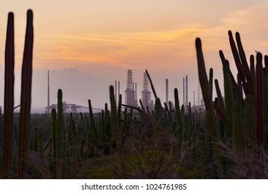 cactus plant at sunset over the sea of the Caribbean island of Aruba with background of oil refineries
