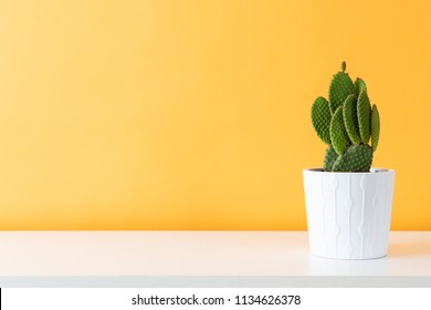 Cactus plant in white pot. Potted cactus house plant on white shelf against pastel mustard colored wall.