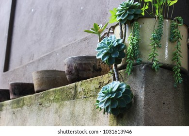 Cactus planted in tin pot, flanked by hand made clay pots on a rough cement wall