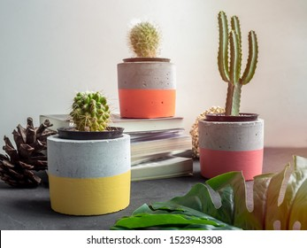 Cactus plants in colorful modern geometric concrete planters decoration with books and green palm leaf on white background. Beautiful painted concrete pots.