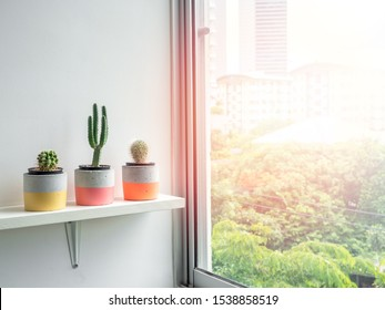 Cactus plants in colorful modern geometric concrete planters on white shelf near window glass with copy space. Beautiful painted concrete pots.