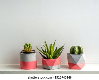 Cactus plants in pink modern geometric concrete planters on white shelf isolated on white background. Beautiful painted concrete pots.