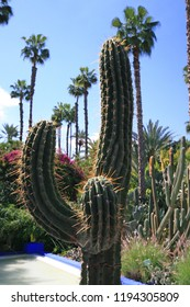 Cactus plants, at Yves Saint Laurent Majorelle Gardens, Morocco, Africa