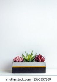Cactus pot. Beautiful painted concrete pot. Green, red and pink succulent plants in modern cubic concrete planter on white wooden shelf on white wall background with copy space vertical style.