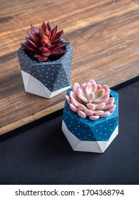 Cactus pot. Concrete pot. Blue and grey painted modern geometric concrete planters with pink and red succulent plants on wooden table, top view vertical style.