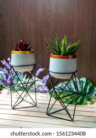 Cactus pot. Concrete pot with iron stand. Red and green succulent plants in modern standing planter with flower and palm leaf on wooden table on wooden background vertical style.