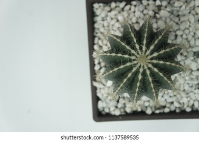 Cactus in pot with copy space