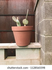 Cactus in a pot in front of wall