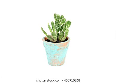 A cactus pot on white background