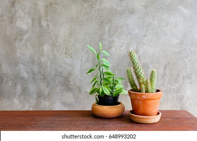 Cactus in pot on wood table with cement wall
