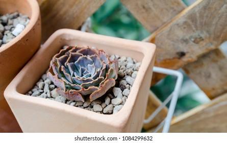 Cactus in pot, Small garden