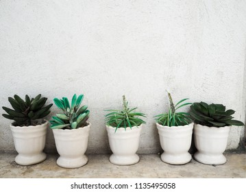 Cactus in pot with White wall background