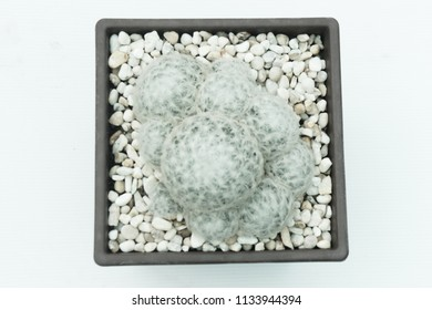 Cactus in pot ,with copy space