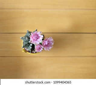 Cactus in pots are bloom beautiful colors isolated on the wooden floor background. Top view