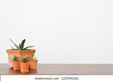 Cactus pots on wood table over white background.
