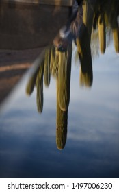 Cactus reflections on the water