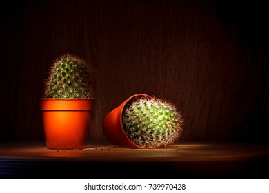cactus shot twice in one frame without using photoshop, large spines
