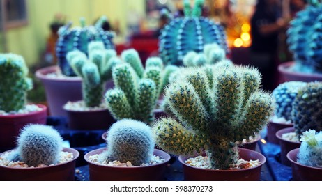 Cactus in a small pot.